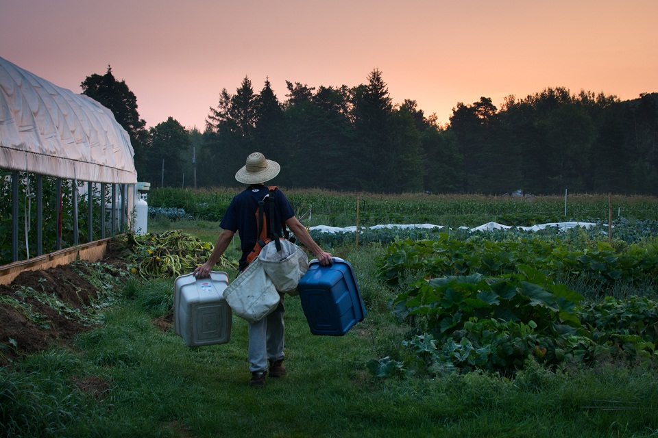 Oliver Wolfe heads out to do some early-morning harvesting at The Spring Farm. Photo by Emily Blackman.