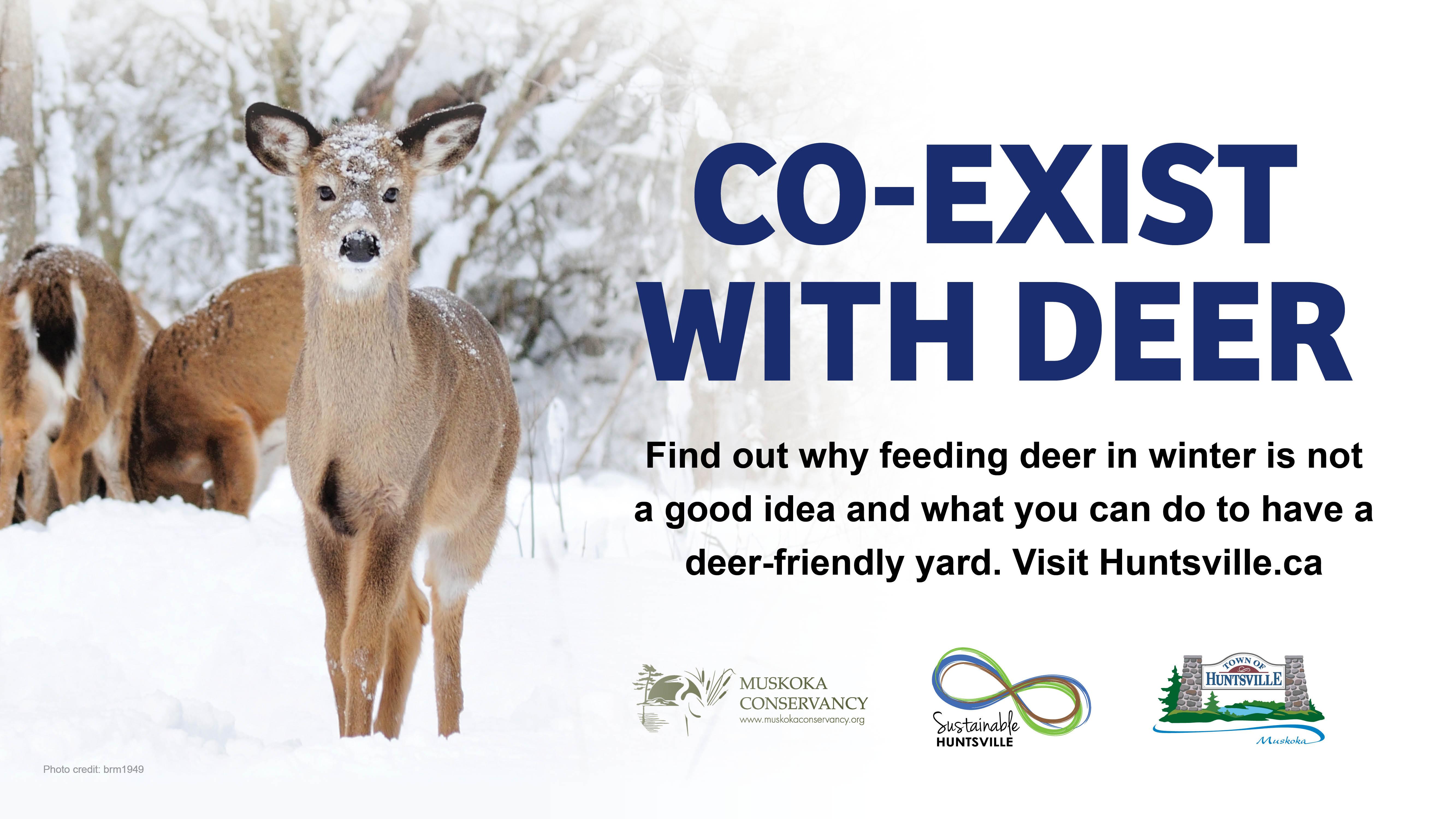 Co-exist with deer