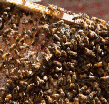 Beehives on Town Hall would be a sweet project