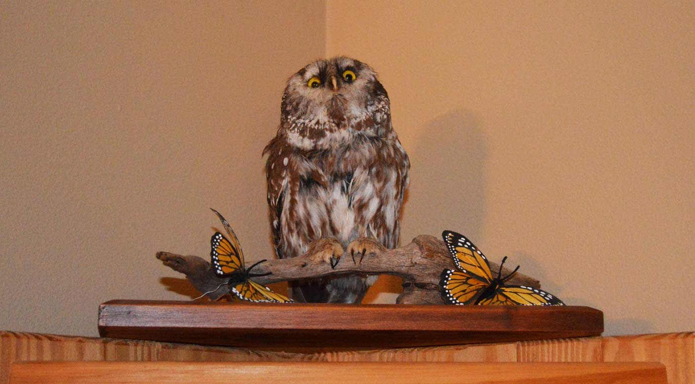 An owl Brown stuffed and mounted himself many years ago.