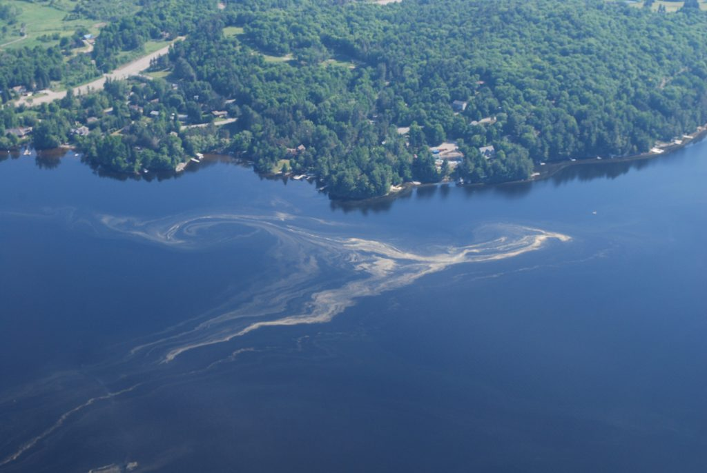 Pine pollen can often be found floating on the lakes. Photo: Brian Tapley