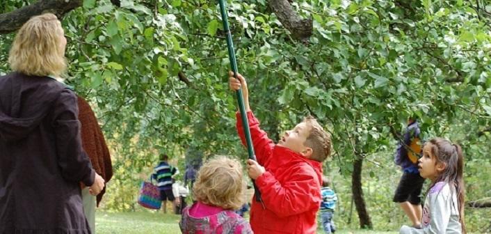 Huntsville Apple Picking Festival
