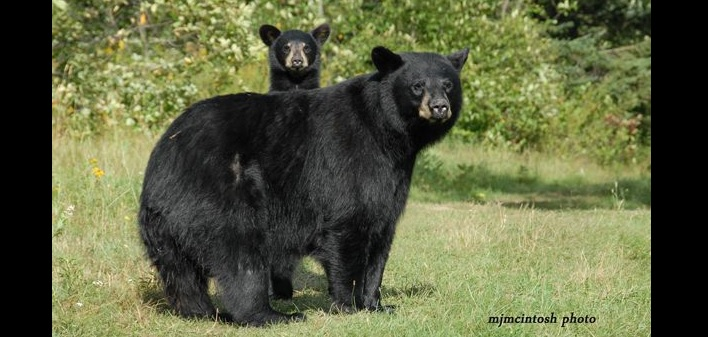 Bears and humans can peacefully co-exist (Photo: Mike McIntosh, Bear With Us Sanctuary)