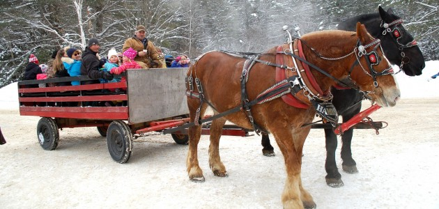 Draft horses Tug (left) and Cory pulled delighted carnival goers through the snow