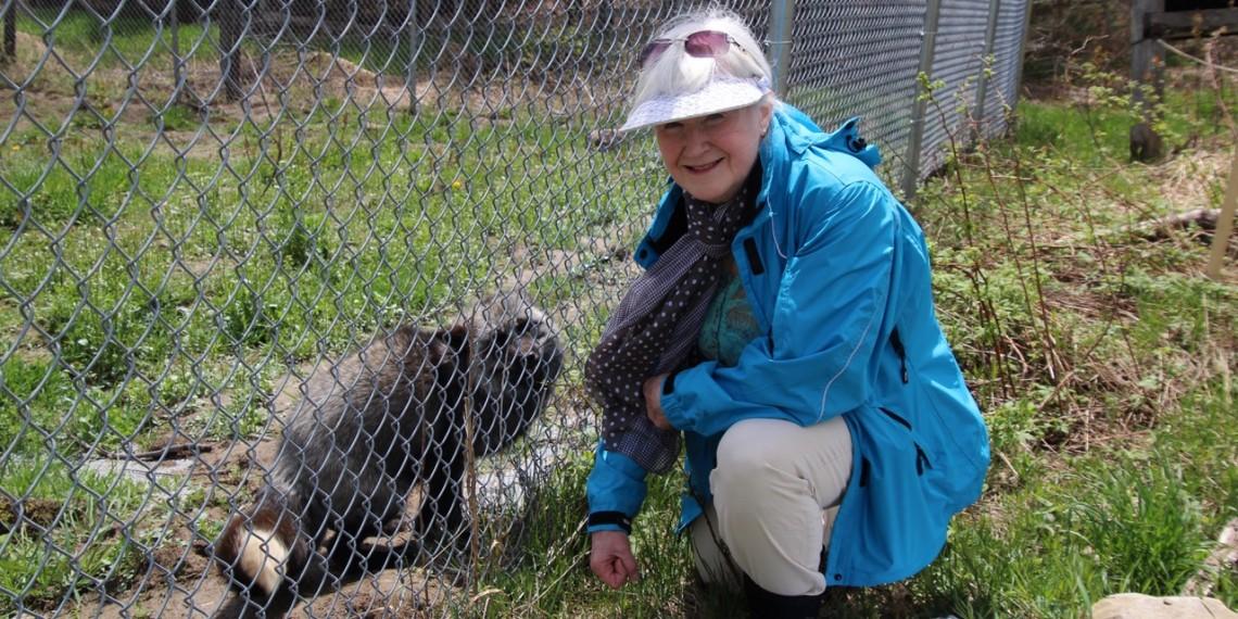 Aspen Valley Wildlife Sanctuary volunteer Susan Brown with Silver, the Silver Fox
