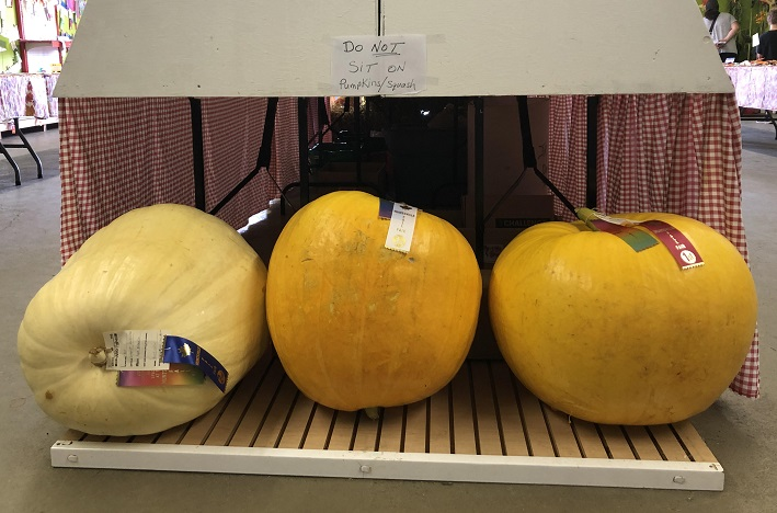 These prize-winning pumpkins and squash grew to impressive sizes