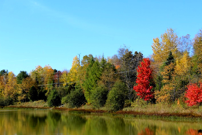There are four scenic ponds on the Morgan House Bed and Breakfast's 77-acre property