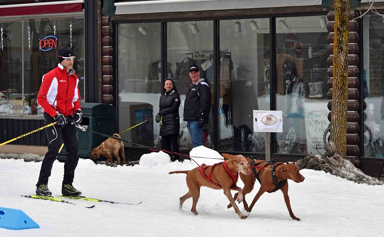 Snow-loving dogs got in on the action with some skijoring, courtesy of The SportLab (Cheyenne Wood)