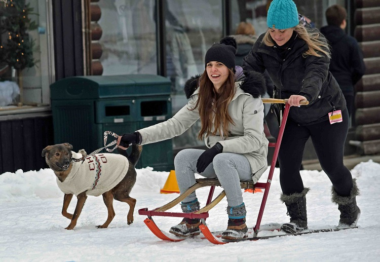 Even dogs could get in on the kicksledding action...while getting the people to do all the work! (Cheyenne Wood)