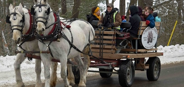 Twin Maples Farm offered horse-drawn wagon rides at the 2020 Port Sydney Winter Carnival (Cheyenne Wood)