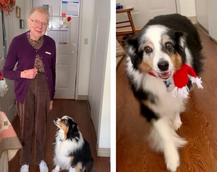 Knitter Pat Power, 89, made many scarves for the project. Blitz is modelling one of them. (supplied)