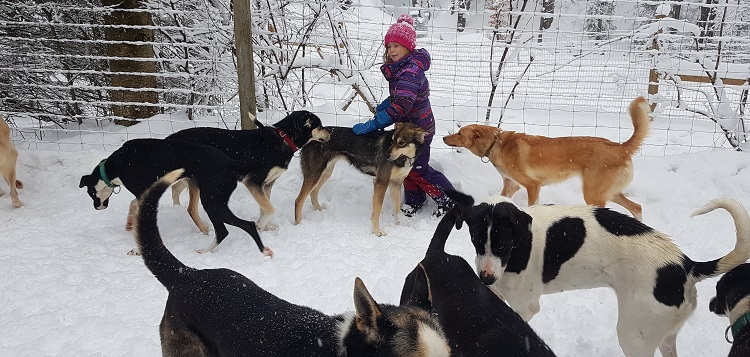 The dogs of North Ridge Ranch dog sledding play with their human friend, Brea (supplied)